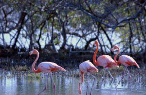 Bonaire Flamingo Sanctuary