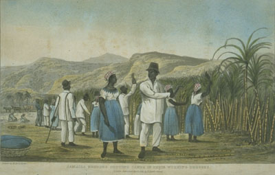 Sugar cane harvest, 1820s Photo credit: colonialismjamaica.wikispaces.com CC BY-SA 3.0